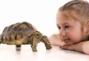 Parents think pet owning has a positive impact on their young children