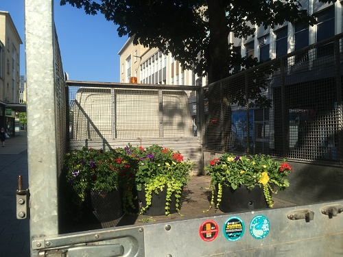 Bristol City Council flowers