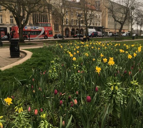 College Green Bristol flowers