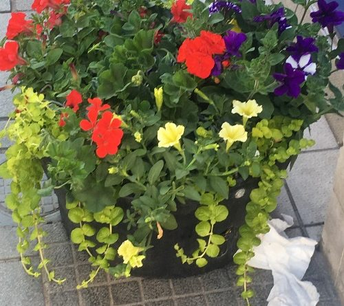 flower baskets broadmead bristol